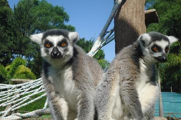 La Aurora Zoo Admission with Transportation from Guatemala City