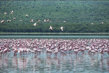 Lake Nakuru National Park Day Tour from Nairobi