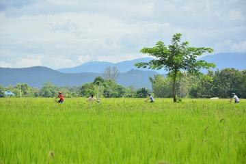 Lanna Countryside by Bike