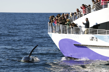 Long Beach Whale-Watching Cruise