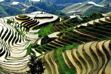 Longji Rice Terraces and Pingan Zhuang Village Day Tour