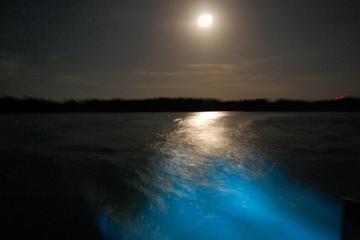 Luminous Lagoon Night Cruise in Jamaica