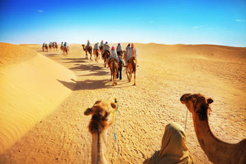 Luxury Desert Experience: Camel Safari with Dinner and Emirati Activities with Transport from Dubai