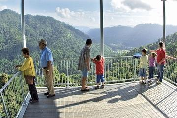 MaMu, Misty Mountains and Wooroonooran National Park Full-Day Tour