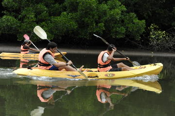 Mangrove Kayaking Tour from Langkawi