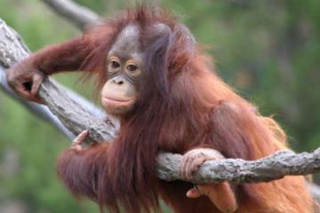 Matang Wildlife Rehabilitation Centre and Kubah National Park Tour from Kuching