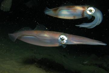 Maui Night Scuba Diving Tour
