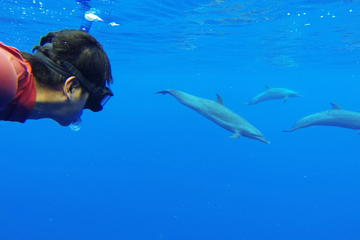 Mazatlan Swim with Dolphins in the Wild