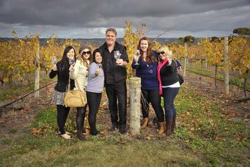 McLaren Vale Winery Tour from Adelaide Including Wine Tasting and Lunch