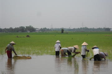Mekong Delta 3-Day Small Group Tour Including Biking and Floating Markets