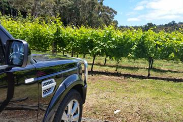 Melbourne Shore Excursion: Small-Group Yarra Valley Wine Tasting Day Trip