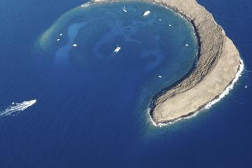 Molokini and Turtle Town Snorkeling Adventure