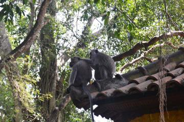 Monkey Forest and Ubud Art Tour in Bali