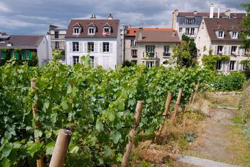 Montmartre Tour with VIP Clos Montmartre Vineyard Visit