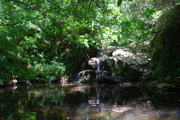 Montseny Guided Hiking Tour with Eco-friendly Lunch from Barcelona