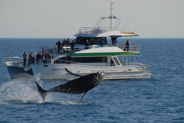 Morning or Afternoon Hervey Bay Whale-Watching Cruise