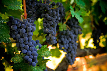 Napa and Sonoma Wine Country Tour
