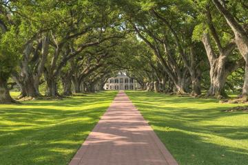 Oak Alley Plantation Tour With Private Transportation