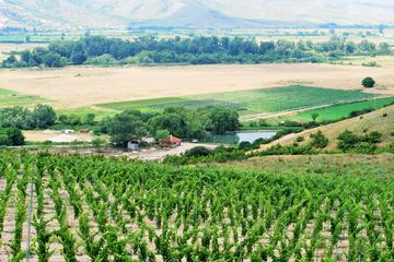 One-Day Wine Tour from Plovdiv