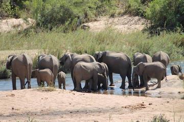 Overnight Kruger Safari from Nelspruit, Whiteriver or Hazyview