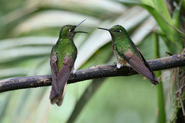 Overnight: Nature Bird-watching, Cacao Farms and Chocolate Tasting