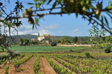 Penedes Region Wine and Food E-bike Tour with Transport from Barcelona