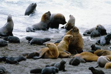 Peninsula Valdes Full Day Tour from Puerto Madryn