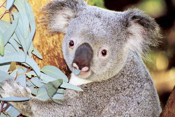 Perth Zoo General Entry Ticket and Sightseeing Cruise