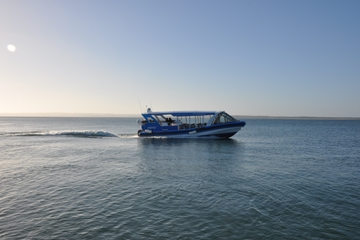 Phillip Island Wildlife Cruise with Optional Penguin Parade and 3 Park Pass