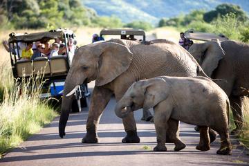 Pilanesberg Game Reserve Day Tour from Johannesburg
