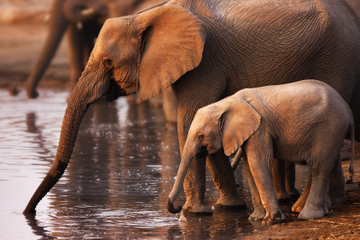 Pilanesberg Nature Reserve Safari and Sun City Day Trip