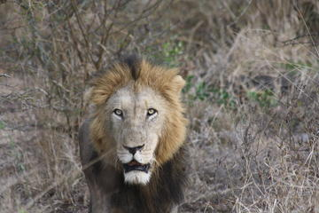 Pilanesberg Safari Walking Tour from Johannesburg