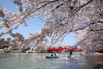 Private Cherry Blossom Tour in Hirosaki with a Local Guide
