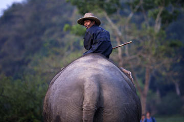 Private Lampang Elephant School and Lamphun Temples Tour from Chiang Mai