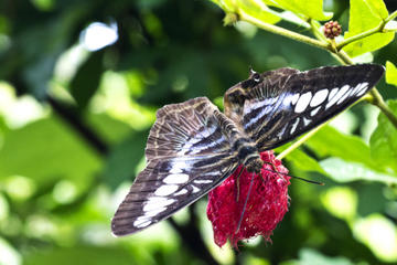 Private Penang Tour: Butterfly Farm and Penang Botanic Gardens