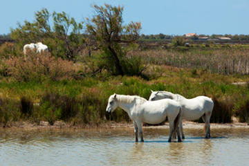 Private Provence Tour: Rhone River Cruise and La Camargue