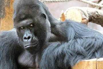 Private Round-Trip Transfer to Prague Zoo
