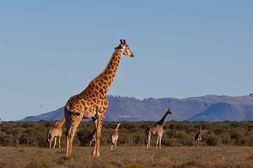 Private Safari And Cultural Day Tour from Pretoria