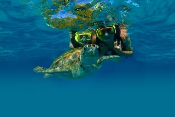 Private Tour: Akumal Marine Turtle Snorkeling and Cenote Adventure