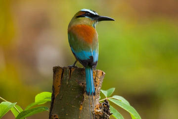 Private Tour: Bird Watching in Cancun