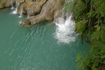 Private Tour: Blue Hole and Fern Gully Rainforest Adventure from Kingston