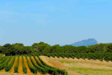 Private tour: Exclusive and Gourmet Wine Tour in Languedoc from Montpellier