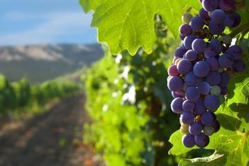 Private Tour of Santiago Including Wine Tasting