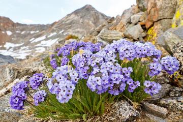 Private Tour: Yosemite Wildflower Hike