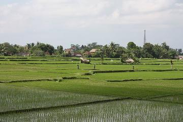 Private Village Life and Traditional Farming Tour in Ubud