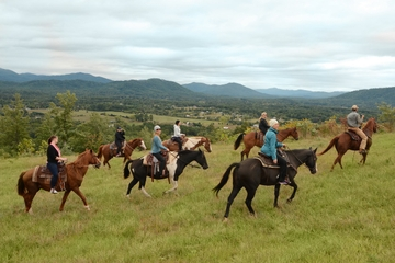Private Vineyard Tour on Horseback with VIP Wine Tasting