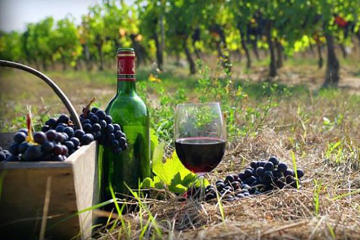 Private Wine Tour to Kakheti from Tbilisi