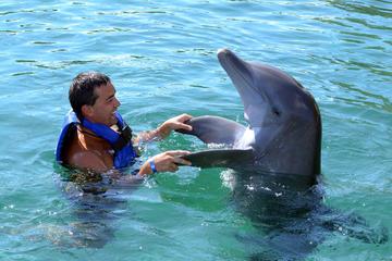 Puerto Aventuras Dolphin Encounter