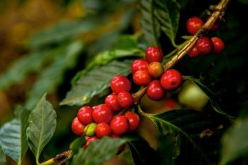 Puerto Quetzal Shore Excursion: Coffee Process and Jade Factory in Antigua