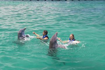 Punta Cana Exteme Swim plus Shark, Stingray and Fur Seal Encounters